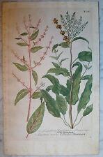 Johann Wilhelm Weinmann (1683 - 1741) kolorierter grabado (# 5293)