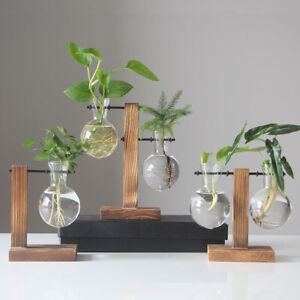 Desktop Hanging Glass Plants With Solid Wooden Stand And Metal Swivel Holder