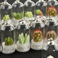 New Cactus Miniature Succulent Cacti Terrarium Wearable Necklace Live Plant Gift