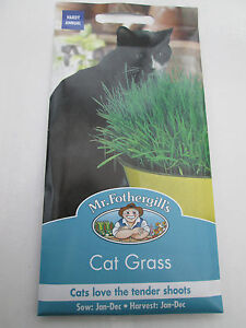 Cat Grass  -   Mr Fothergills Seeds -     **NEW STOCK/LONG EXPIRY DATE2022 **
