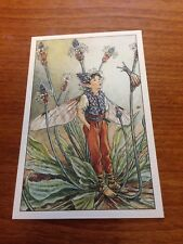Cicely Mary Barker Flower Fairy Postcard - Ribwort Plantain Fairy - NEW