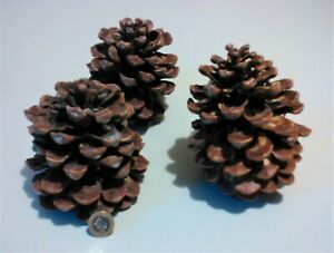 Natural Giant Pine Cones Pack of 3 Pieces  10cm - 12cm Tall