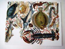 Vintage Die Cuts of Sea Creatures - Seahorse, Lobster, Turtle, Swordfish  (N) *