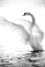 STUNNING ELEGANT ABSTRACT SWAN CANVAS #5 QUALITY WHITE SWAN PICTURE WALL ART A1