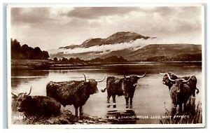 Postcard Ben Lomond from Luss Mist Effect Highland Cattle Scotland