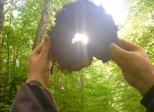 Adirondack Chaga - Wild Organic Inonotus Obliquus Mushroom