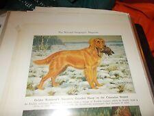 Walter A. Weber Golden Retriever bookplate 1947 National Geographic Magazine