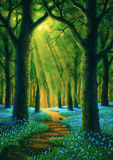 """Bluebell Wood"" by Danny Flynn  (limited edition print)"