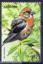 Red Crossbill, Birds, Lesotho 1999 MNH  - M72
