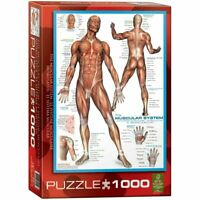 Eurographics  1000 Piece Jigsaw Puzzle  - The Muscular System EG60002015