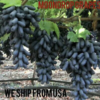 Rare moon drop grapes 3 fresh cuttings Waxed Ends ..Shipped From USA..