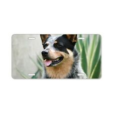 CafePress Australian Cattle Dog License Plate (1015026389)