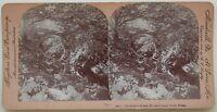 Il la Moglie Dream Betws-Y-Coed Wales UK Foto Stereo Vintage Albumina 1897