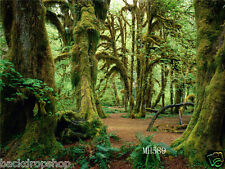 Jungle Forest Vinyl Backdrop Studio Photography Photo Background 7x5ft