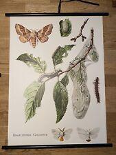 Goldafter Falter Wald Insekten  Schulwandkarte 50 cm x 70 cm