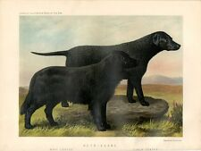 Stampa antica cani RETRIEVERS nella campagna inglese 1879 Old print dogs