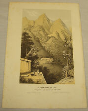 c1853 Antique COLOR Print/TEA PLANTATION IN CHINA /Van Houtte