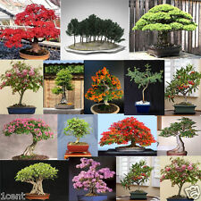 85 seeds maple delonix baobab judas acacia sequoia apple crape cedar tree bonsai