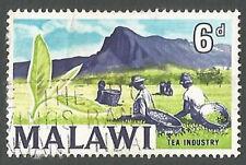 Malawi Scott# 10, Harvesting Tea, 6p, Used, 1964