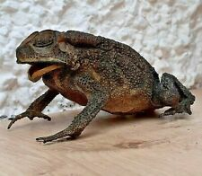 More details for 'real' preserved toad apprx. 9 cms : 3 1/2