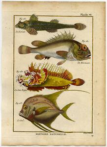 Antique Fish Print-LOOKDOWN-SCORPIONFISH-SCULPIN-POPEYED GOBLIN-Bonnaterre-1788