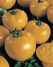 Sunny Boy Tomato Seeds