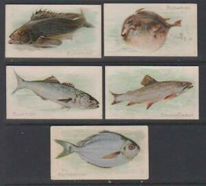 CIGARETTE CARDS American Tob 1900 Fish from American Waters - (5 cards) 1-5