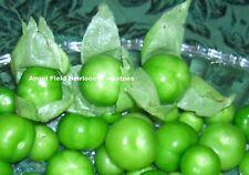 Tomatillo Mexico Heirloom Tomato Seeds 20 Organic Garden Angel Vegetable Seeds