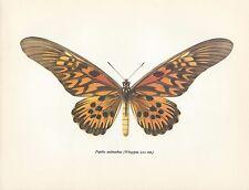 "ORIGINAL VINTAGE 1965 BEAUTIFUL BUTTERFLY PRINT 8X10"" MOUCHA  design 1"