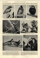 1952 Cage Bird Exhibition Ancient Jawbones Avallon