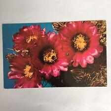 Fender Hedgehog Cactus Echinocereus Fendleri Unposted Postcard