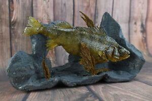 """Amazing Stuffed 11"""" Perch wall Mount Taxidermy Fish"""