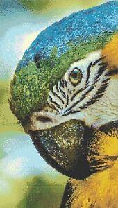 MACAW # 1 - COUNTED CROSS STITCH CHART