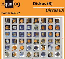 AQUALOG Poster The Most Beautiful Discus # 2, LAMINATED