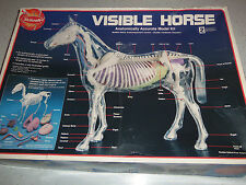 SKILCRAFT VISIBLE HORSE ANATOMICALLY ACCURATE MODEL KIT Large 2 parts missing