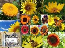 Sunny Sunflower Mix Seeds    S11