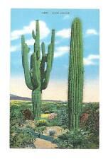 SAHUARO CACTUS Giant Saguaro Desert Vtg Linen Postcard