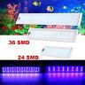 220V Adjustable 5730LED Marine Aquarium 2 Mode Touch Switch Fish Tank Light Lamp