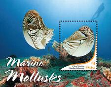Palau-2015-Marine life-Marine Mollusks
