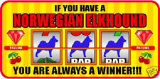Having A Norwegian Elkhound A Winner Vegas Sticker