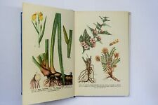 Botanical Book, Vintage Illustrated, herbaceous plants, Flowers Draw, drug plant