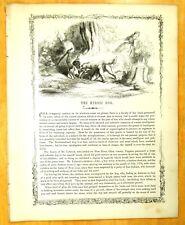 1856 Print THE HEROIC DOG John Lybrook New River Giles Co Virginia 1774 INDIANS