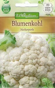 4006 Chrestensen Blumenkohl 'Neckarperle' Saatgut Samen