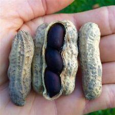 12Pcs Black Peanut Vegetable Seeds Rare 2 Kind Bonsai Perennial Tasty Garden
