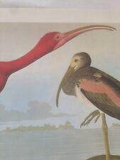 Scarlet Ibis Audubon Bird Picture Print Art Poster