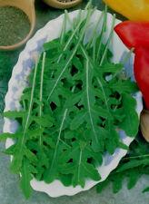 Salatrauke min 100 Samen Rucola Eruca vesicaria ssp sativa Senfrauke Rauke