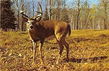 A24/ Green County Ohio 3 Postcards Xenia Horses Deer Greetings from..2