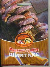 Mycelium Shiitake
