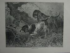 Impresión De 1881 punteros Alemana del Libro de Vero Shaw Cassell el perro