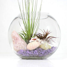 Feminine themed glass terrarium with three air plants.| Perfect for Mother's Day